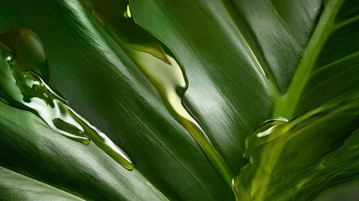 Cosmétiques bio, naturels, vegan : quelles différences ?