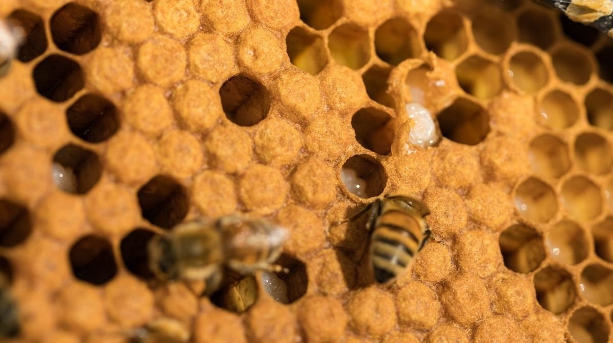 Honey & Wounds: Everything You Need to Know