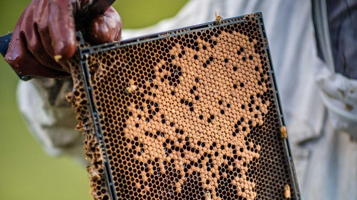 What Makes Manuka Honey Authentic?