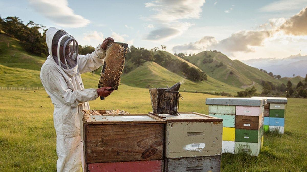 Why You Should Choose Sustainable Manuka Honey