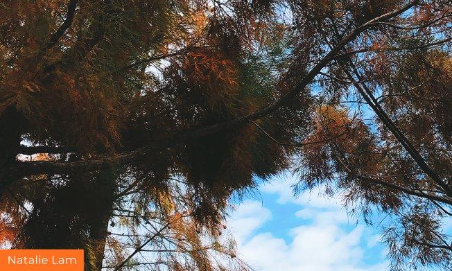 Tree overhangs in sunshine