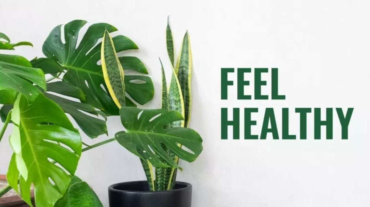 5 ways to feel healthier this spring   Nature's Truth