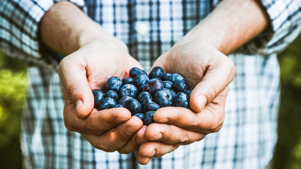 What are antioxidants and how can I eat more? | Nature's Truth