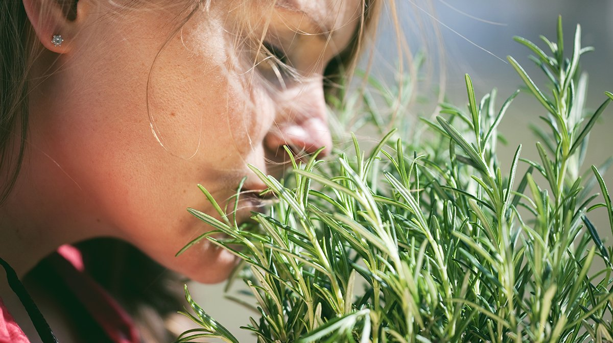 Woman smelling rosemary plant