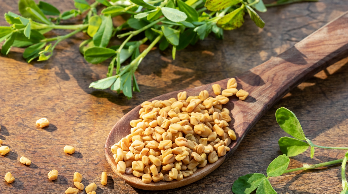 Fenugreek And Weight Loss: Can It Help You To Lose Weight?