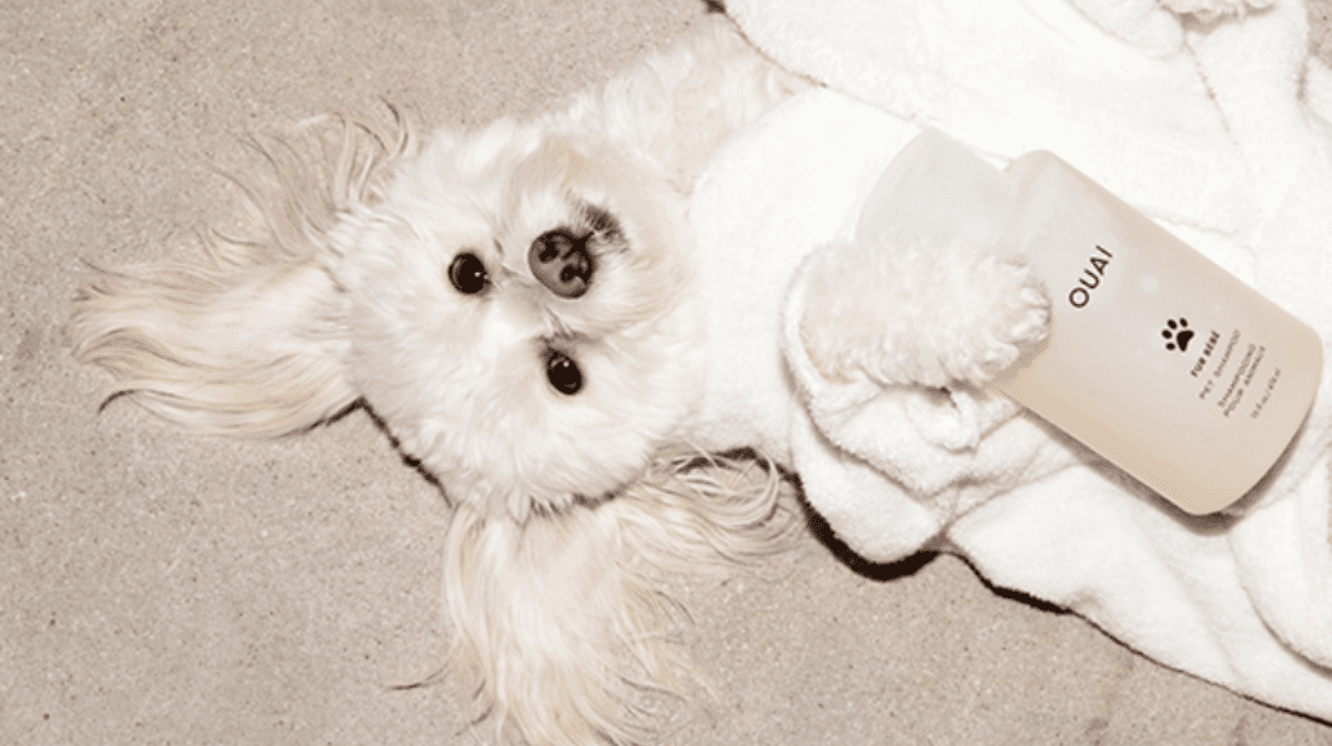 The perfect hair pair for you and your pooch