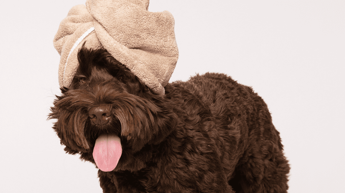 The ultimate pamper night for you and your pet