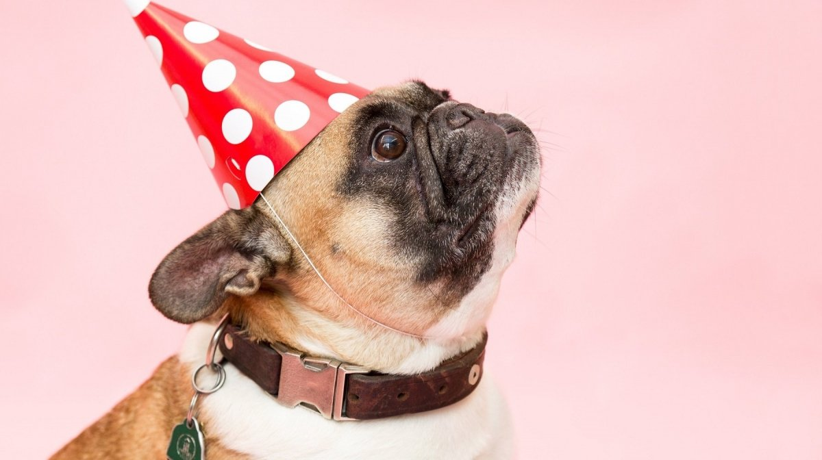 The Best Gifts For Dog Lovers, Pet Owners & Animal Lovers
