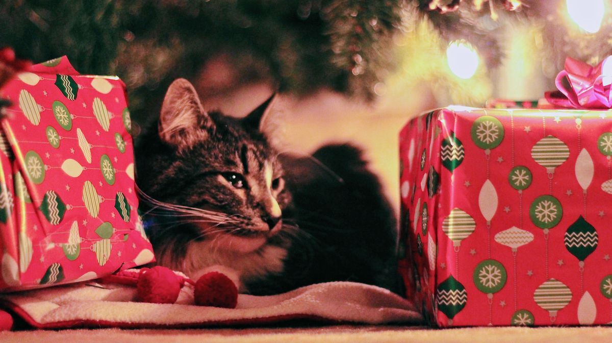 The Top 10 Best Gifts For Cat Lovers