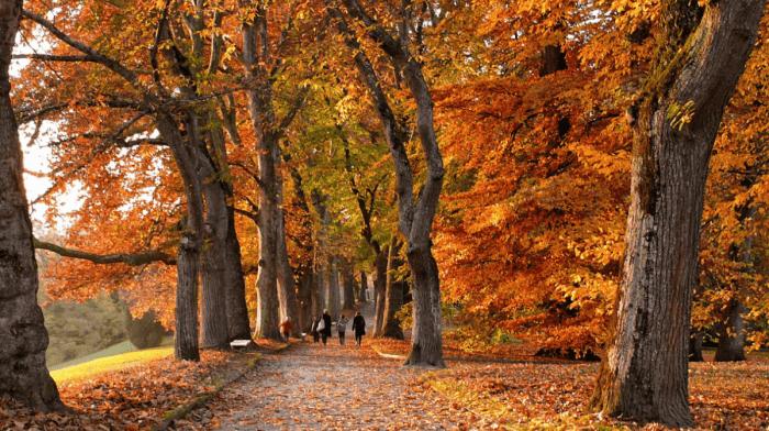 10 Abnehmtipps, um diesen Herbst den Versuchungen zu widerstehen