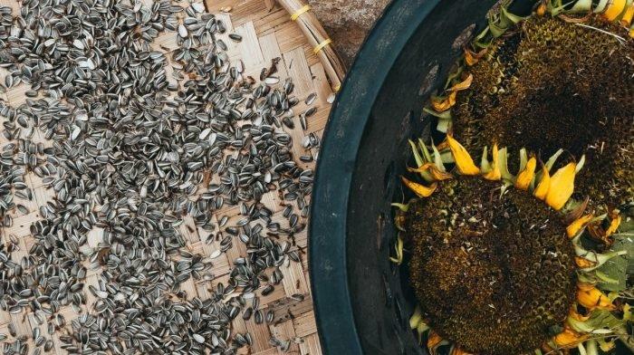 Semințele de floarea-soarelui : Nutriție & Avantajele de sănătate