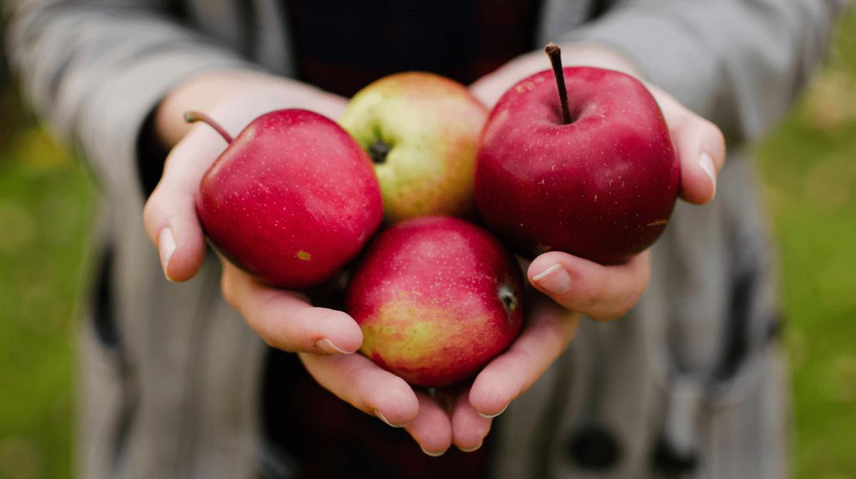 Tous les bienfaits du vinaigre de cidre de pomme