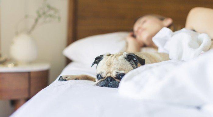 At Home Athletes | Dieser Experte erklärt, wieso Schlaf so wichtig ist