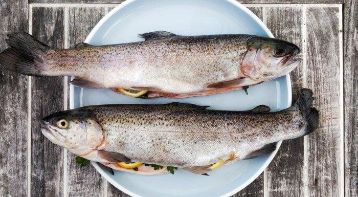Fischöl verlängert Lebenserwartung