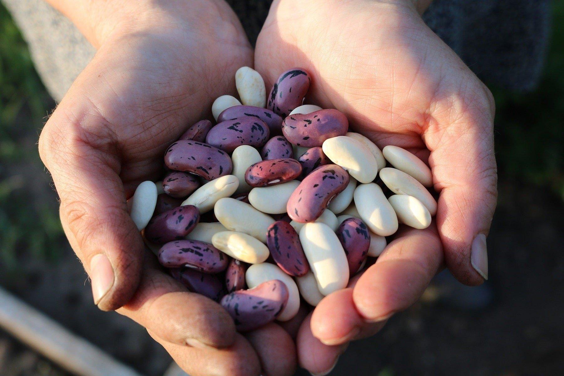 Beneficios y propiedades de las alubias blancas