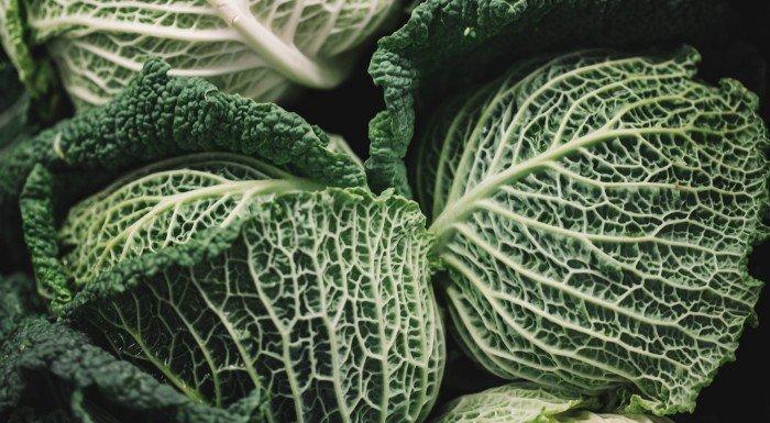 dieta de la sopa de col o repollo