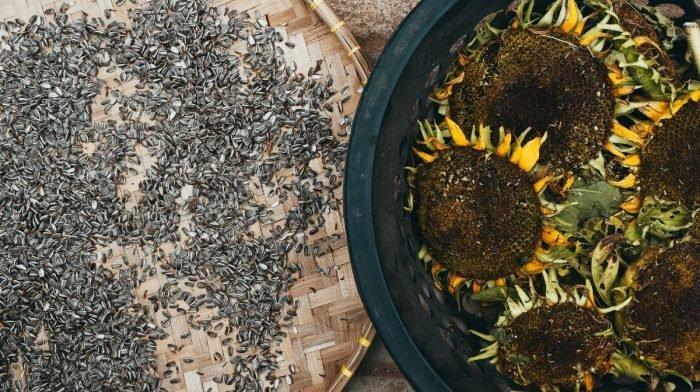 Sunflower Seeds: Nutrition & Health Benefits