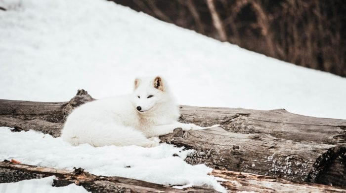 Ethical Skincare With Snow Fox