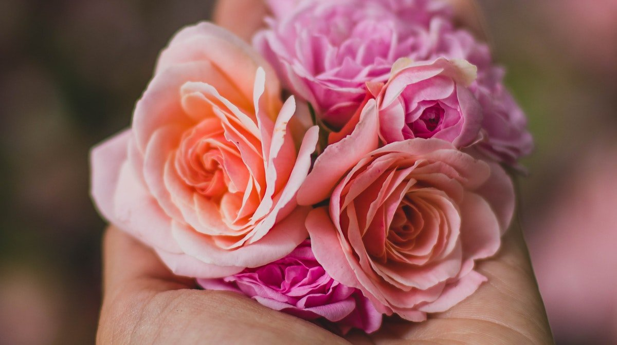 The Benefits Of Rose-Infused Skincare And Our Top Picks - GLOSSYBOX
