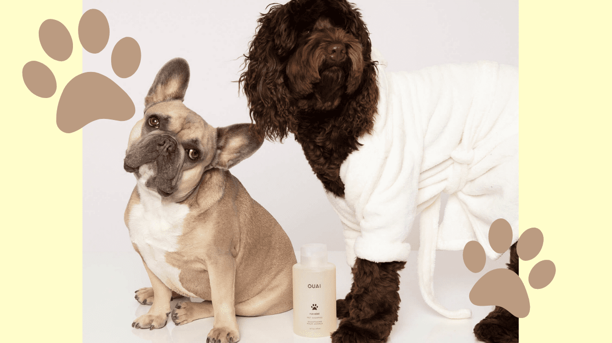 You Can Now Match Yours And Your Pooch's Haircare With This New Pet Pampering Shampoo!