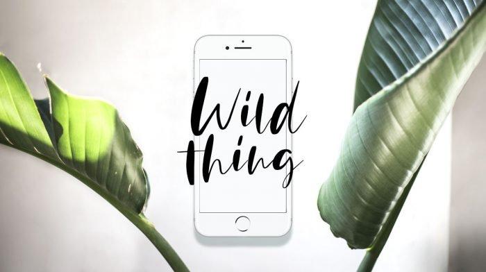 GLOSSY Wallpaper: Der Wild-Thing-Look für Smartphone und Co