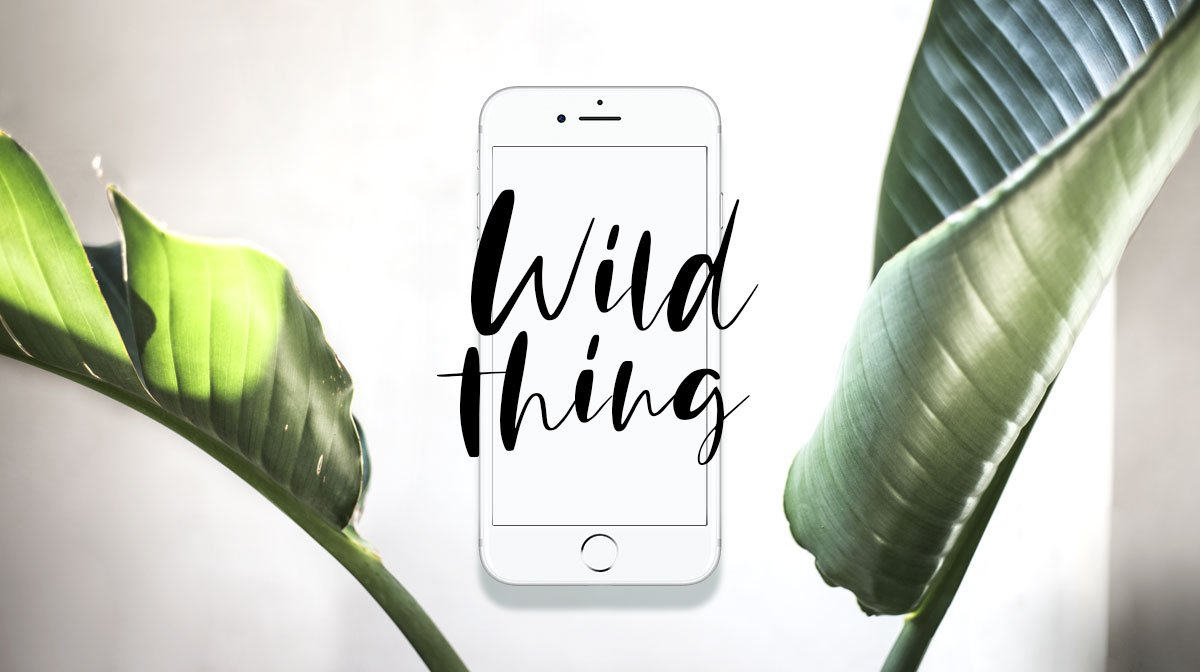 glossybox-wallpaper-screensaver-mai-wild-thing-clean-