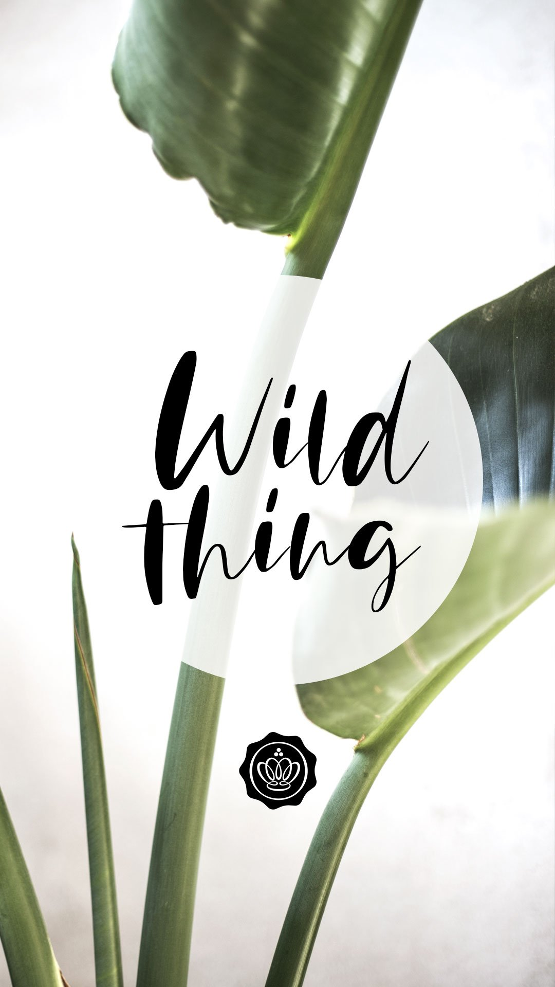 glossybox-wallpaper-screensaver-mai-wild-thing-clean-