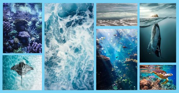 Journée mondiale de l'océan - tout savoir