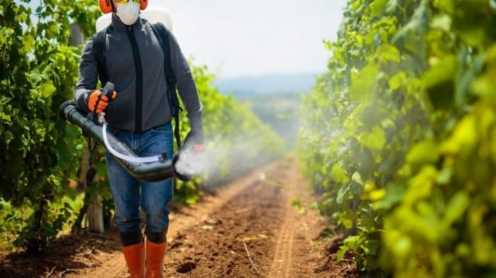 Pesticide Use Linked To Weight Gain In Mice, Study Reveals