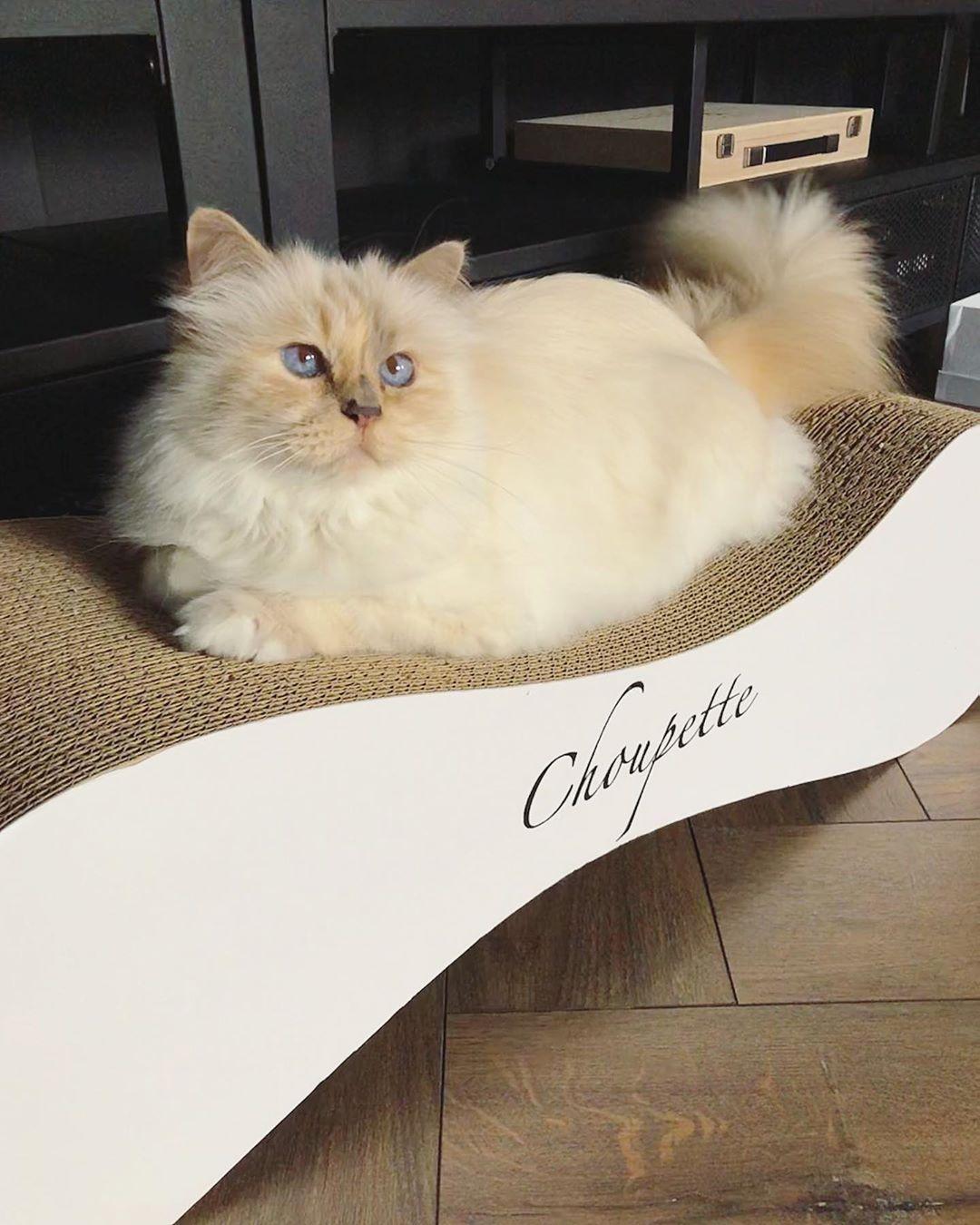 Karl Lagerfeld cat
