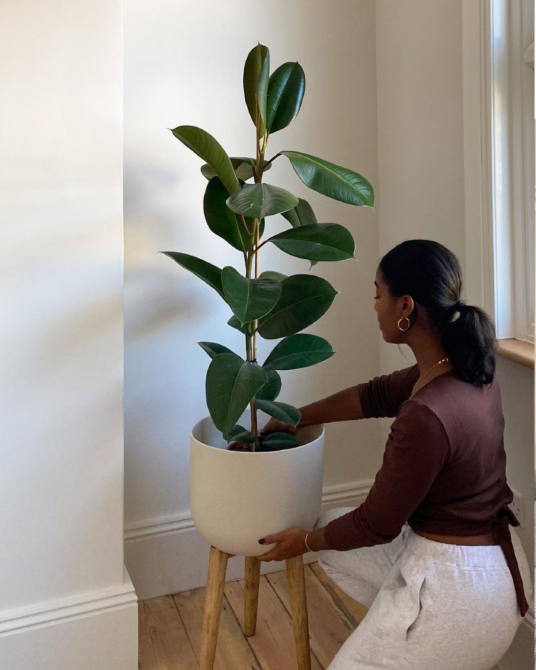 Large plant in uni room