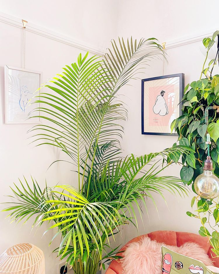 Large plant and framed prints in box room