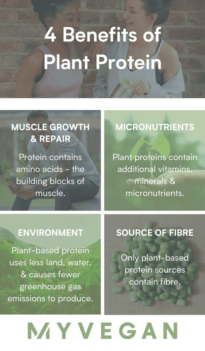 4 Benefits of Plant Protein infographic
