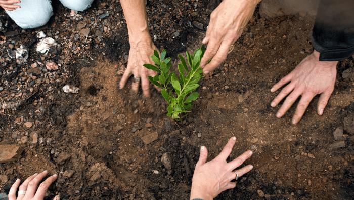 hands planting tree sapling