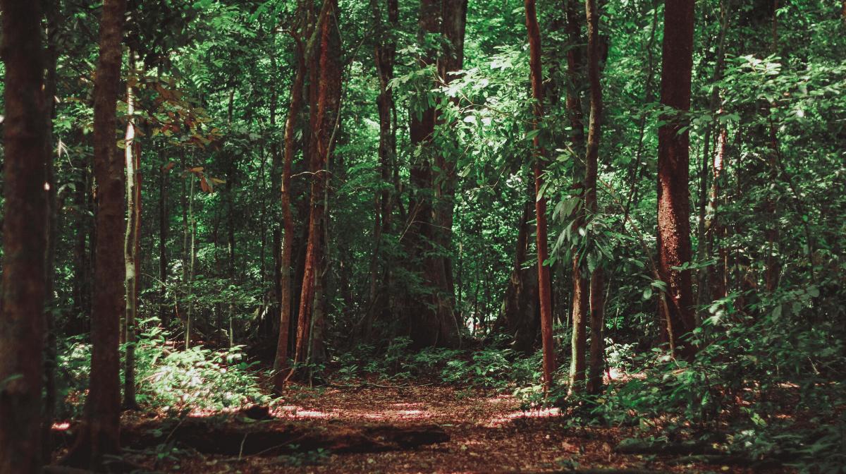 Our Forest Stewardship Council (FSC) Certification