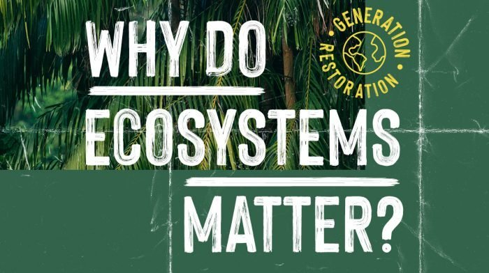 What Are Ecosystems & Why Are They Important?