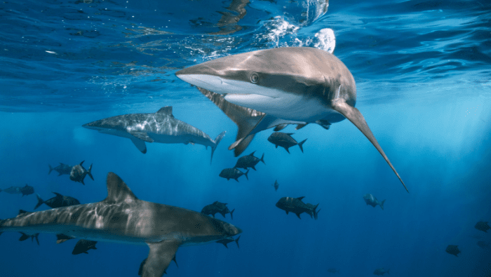 Key Takeaways From Seaspiracy | Myvegan