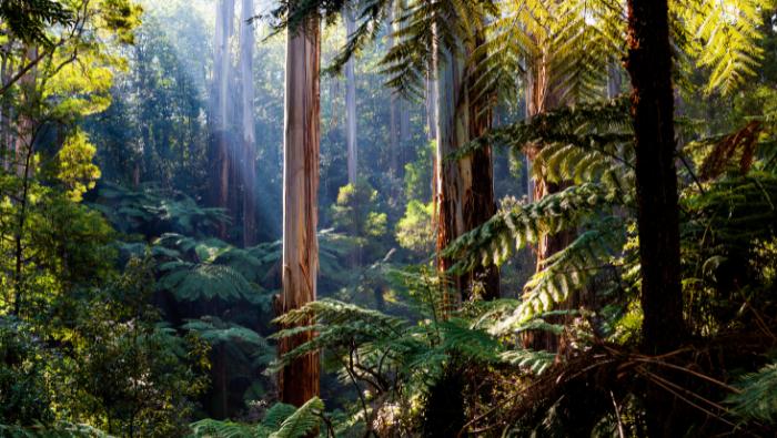 What Is Ecosystem | Myvegan
