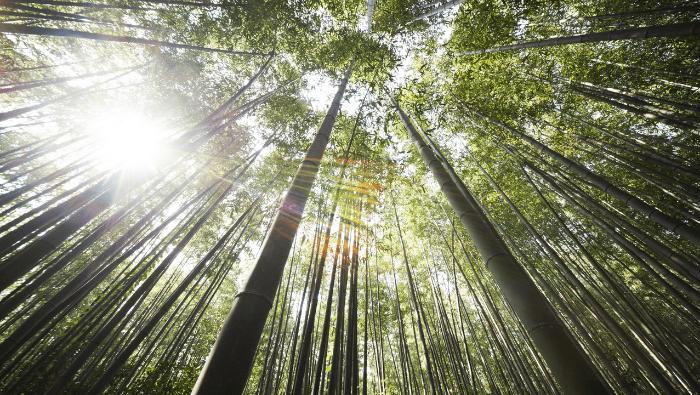 Ecosystem Restoration | Myvegan