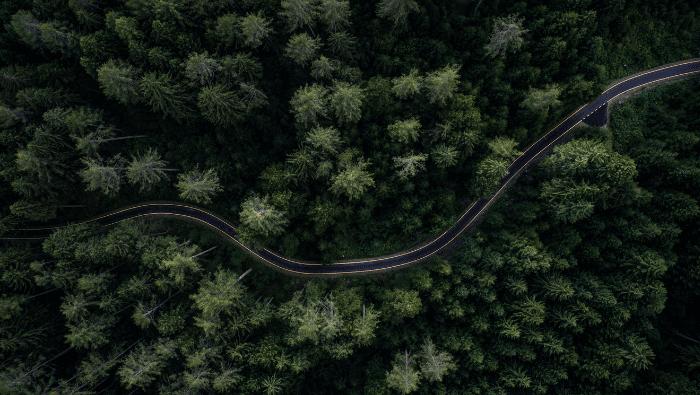 More:Trees | Myvegan | The Hut Group