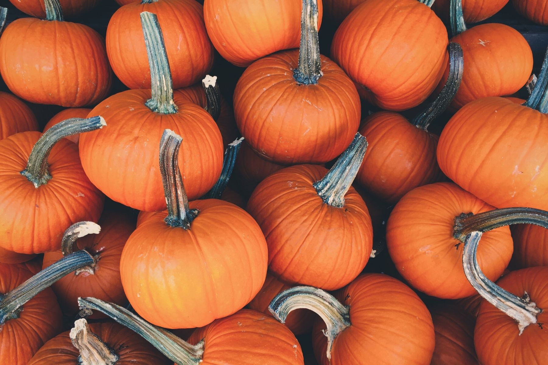 Four Ways to Get the Most from Pumpkins This Halloween