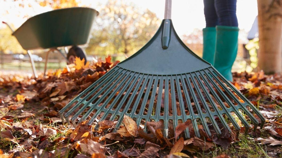 raking autumn leaves for exercise