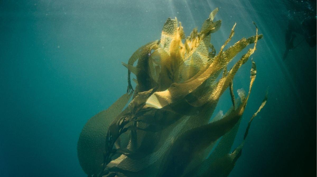 algae under the sea