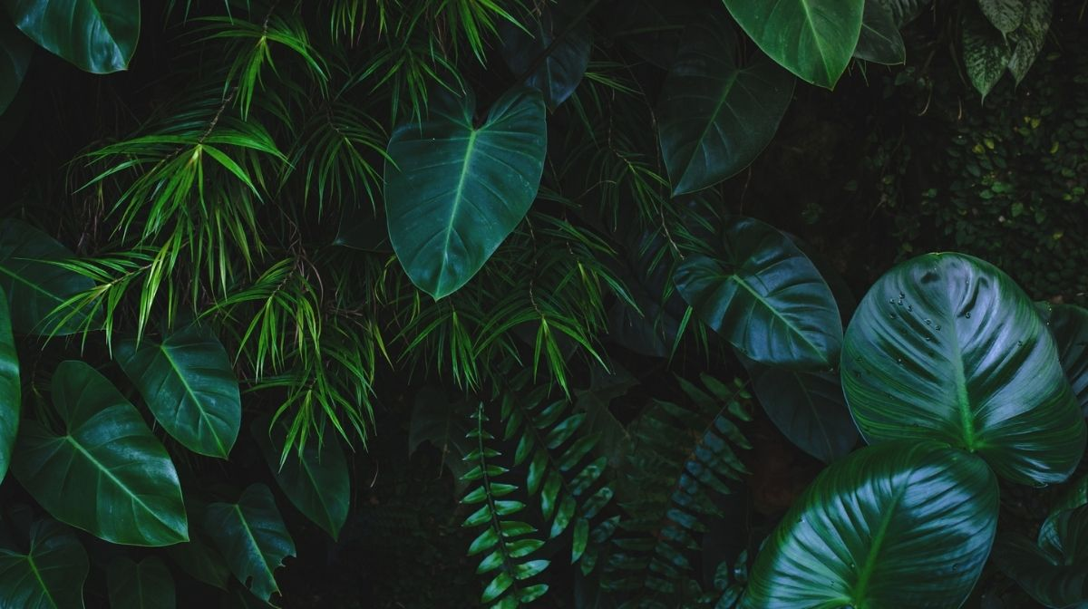 leaves in a rainforest