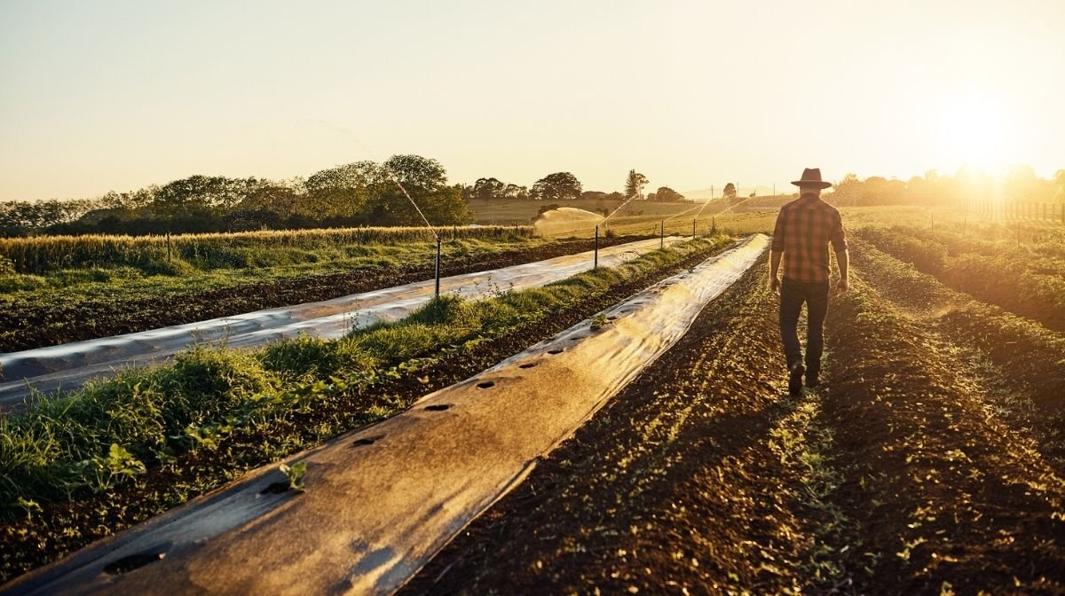 Why Organic Farming Matters to Us