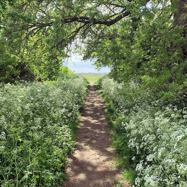 A footpath in the countryside