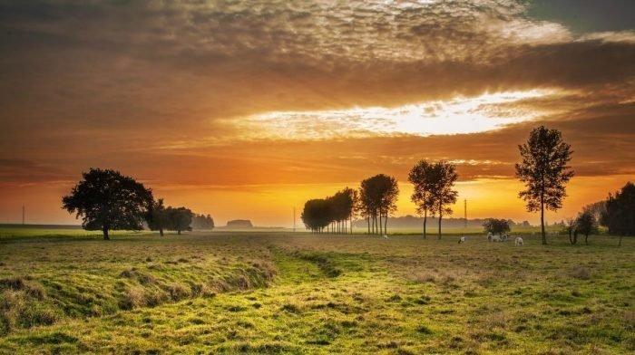 Tout ce que vous devez savoir sur le collagène de bovins nourris à l'herbe