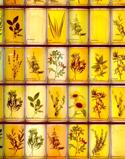 The plants & natural ingredients that are used by Burt's Bees set in a stained window