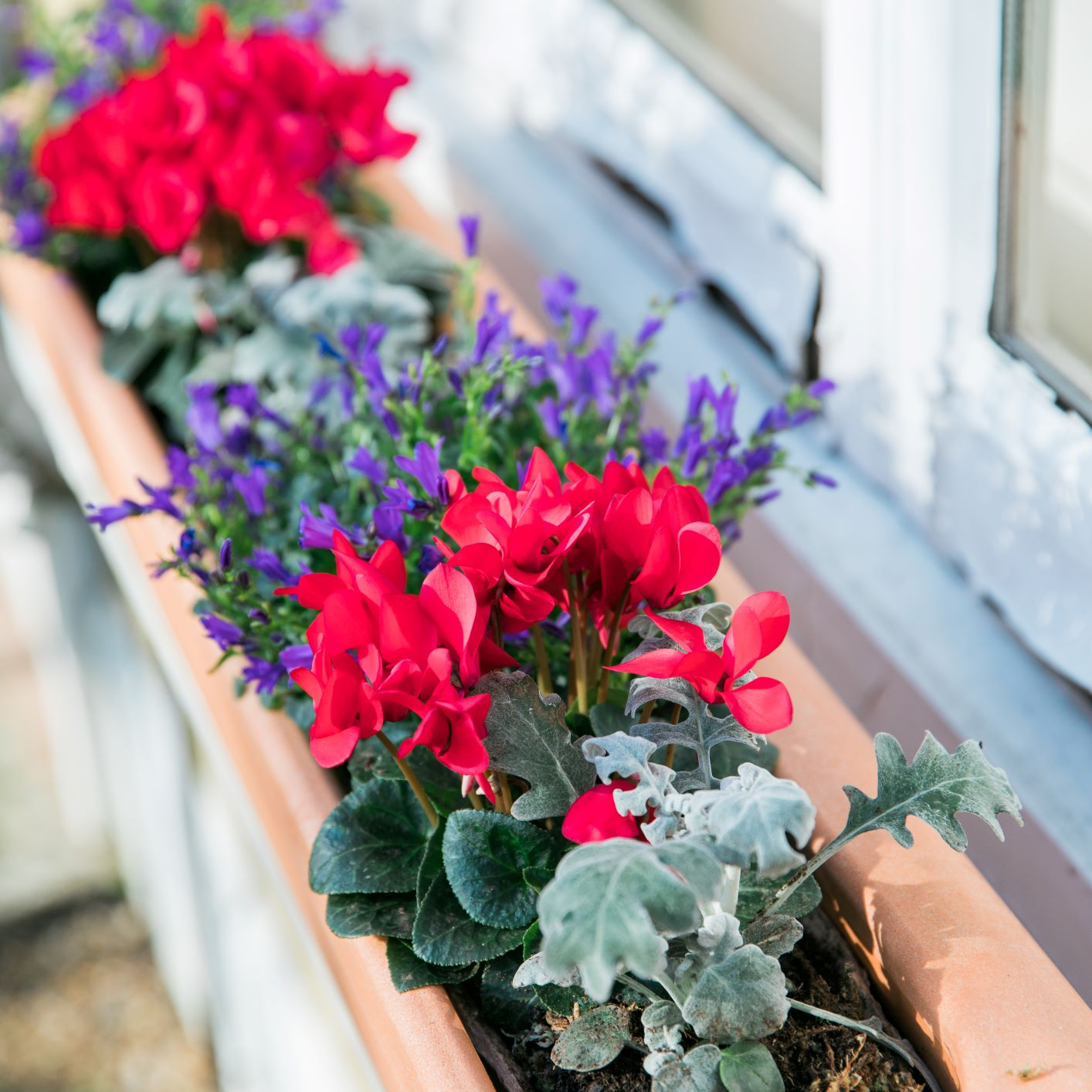 A Window Fleur product