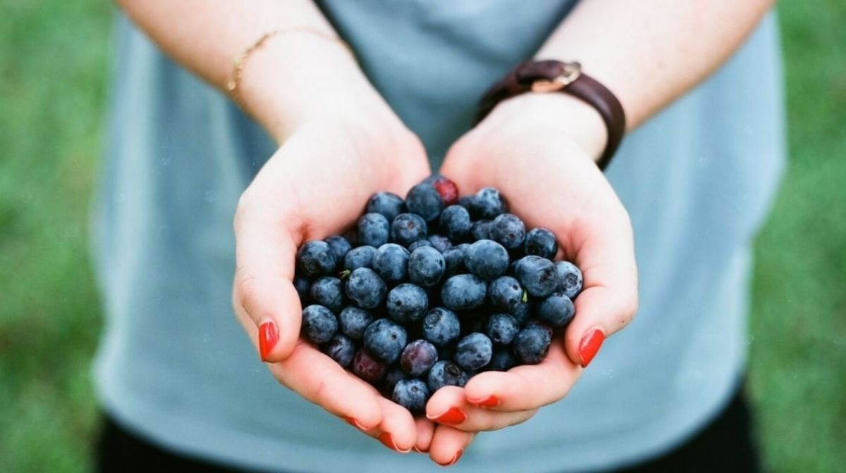 Gli alimenti biologici sono davvero la scelta migliore per la salute?